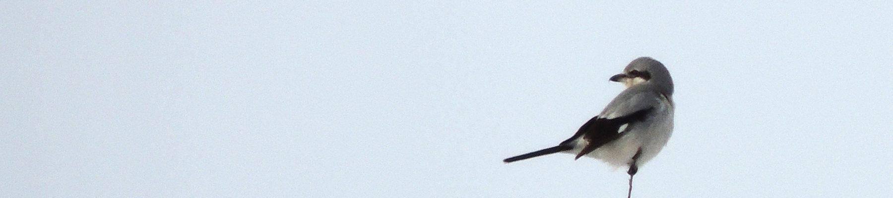 Wausau Bird Club